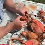 Maryland Steamed Crabs recipe
